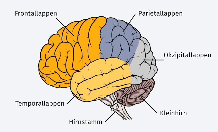 Hippocampus Trainieren